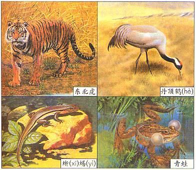 中国部分动物种数统计表