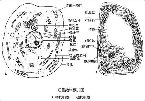 大小,种类千差万别,但不同的细胞却有相似的基本结构,即都由细胞膜