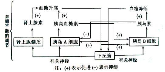 电路 电路图 电子 原理图 544_237
