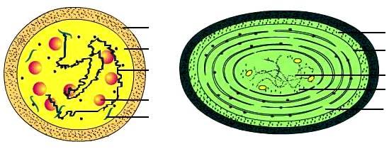 2.细胞核的结构. 3.原核细胞和真核细胞的比较.