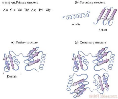 这五种碱基的结构式如下图所示:dna中碱基的百分含量一定是a=t,g=c,不