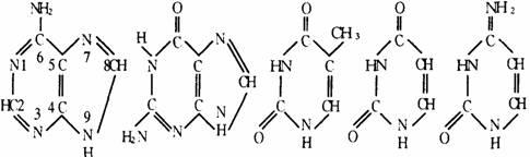 结合方式:一个氨基酸分子的羧基和另一个氨基酸分子的氨基脱水缩合图片