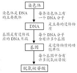 (一)染色体,dna,基因,脱氧核苷酸之间的关系