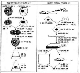 ①非细胞结构 ②原核细胞