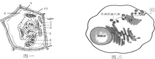 专题一 细胞的组成,结构和功能(含细胞工程)