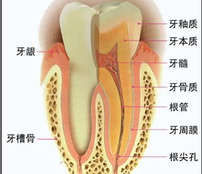 蛇口腔的结构图