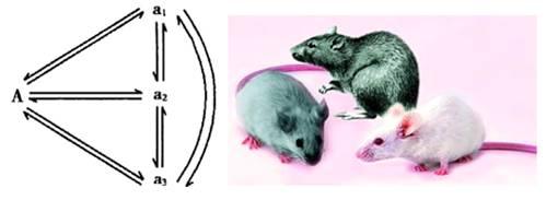 大肠杆菌组氨酸缺陷型基因