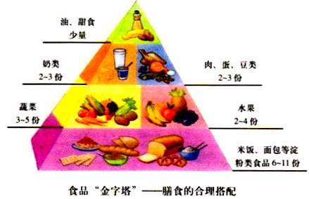 六大营养素是什么_鸡蛋富含人体所必需的六大营养素堪称理想食品
