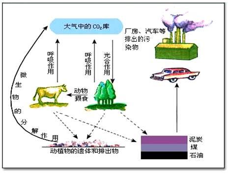 生物体的基本结构思维导图