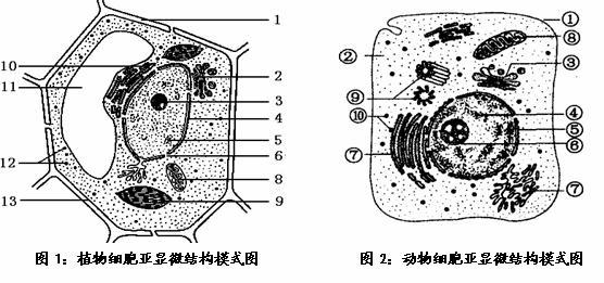 动物细胞亚显微结构模式图