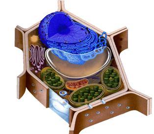 下列四组生物中,细胞结构最相似的是