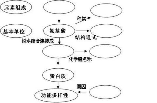 (4)现要合成由100个氨基酸组成的蛋白质,由氨基酸排列顺序不同而