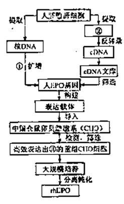 乙酸 ②写出f的结构简式 &nbsp