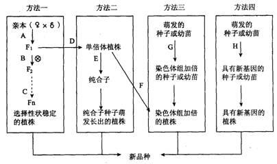 生物体的结构层次概念图