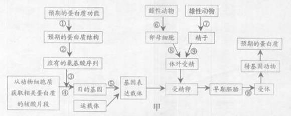 种群的结构概念图