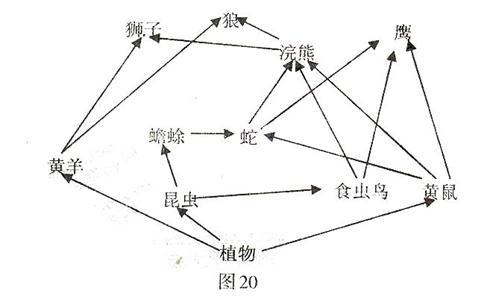 系统的食物网简图