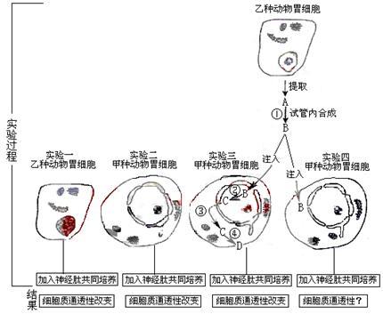 胃膜壁的组织结构